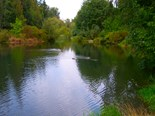 Whatcom Creek