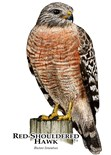 Hawk Picture