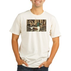 Shoveler Ducks Ash Grey Organic Men's Fitted T-Shirt